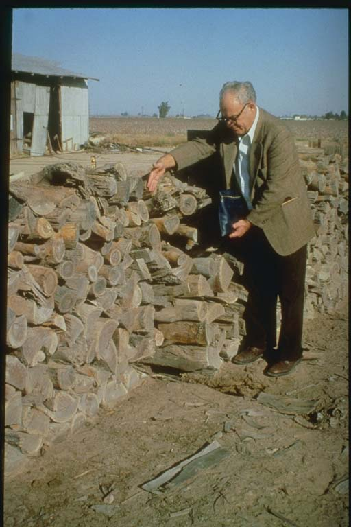 Offset of woodpile along Imperial fault