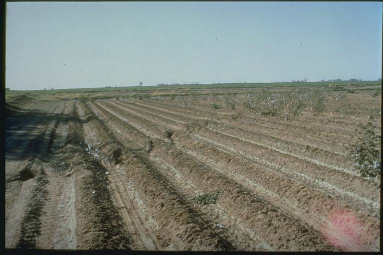 Offset of rows in plowed field