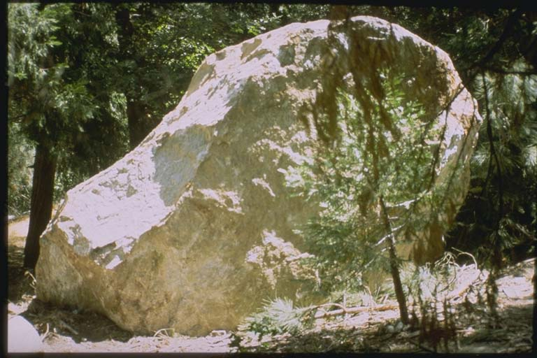 One of the large dislodged boulders rests against a tree