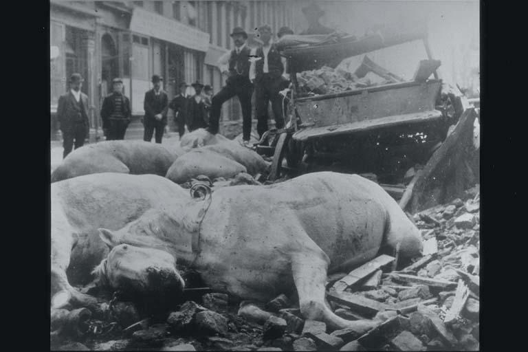 Horses Killed by Falling Bricks