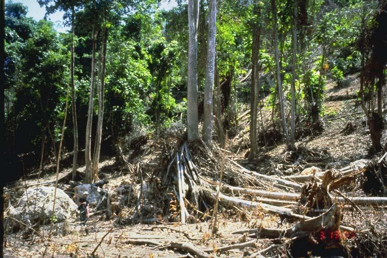 Upper extent of inundation, Riangkroko, Indonesia