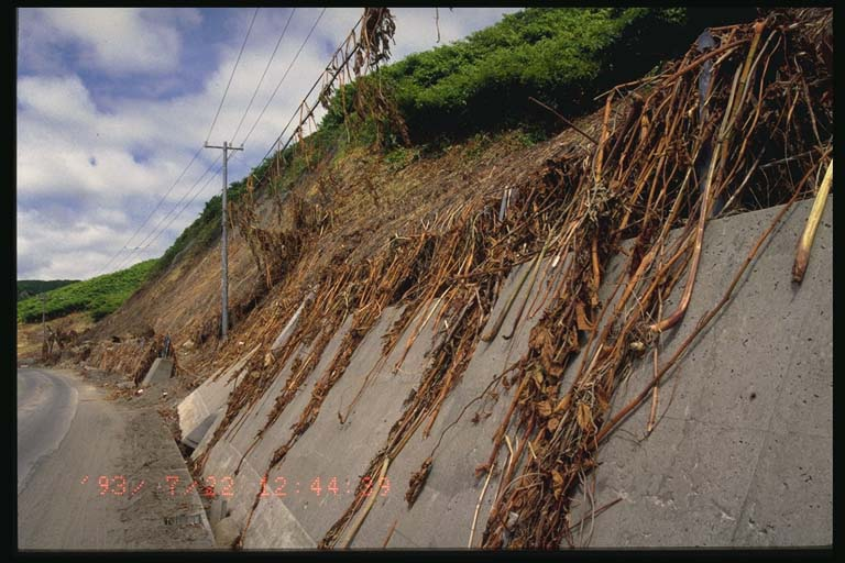 Debris in overhead utility wires on west Okushiri Island