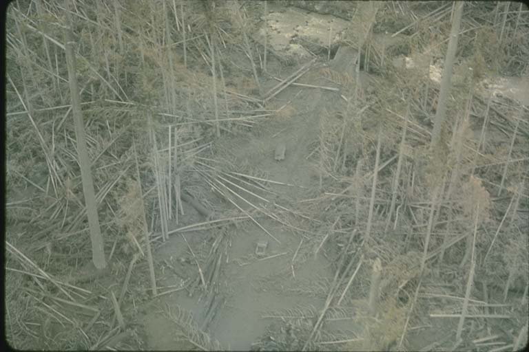 Deforestation Resulting from the 5/18/1980, Blast at Mount Saint Helens, WA