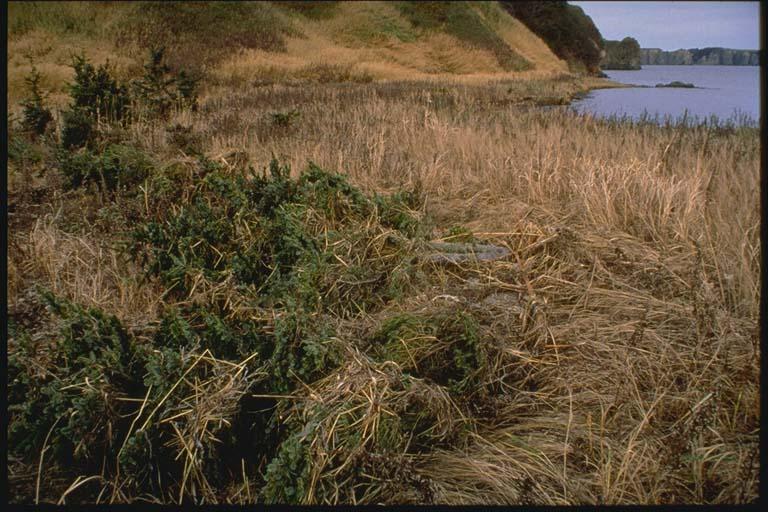 Dimitrova Bay