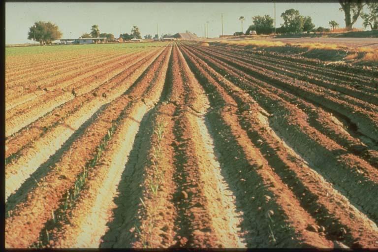 Fault Trace across Lettuce Field